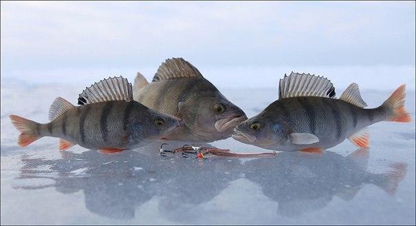 Ловля рыбы в регионах Украины и России
