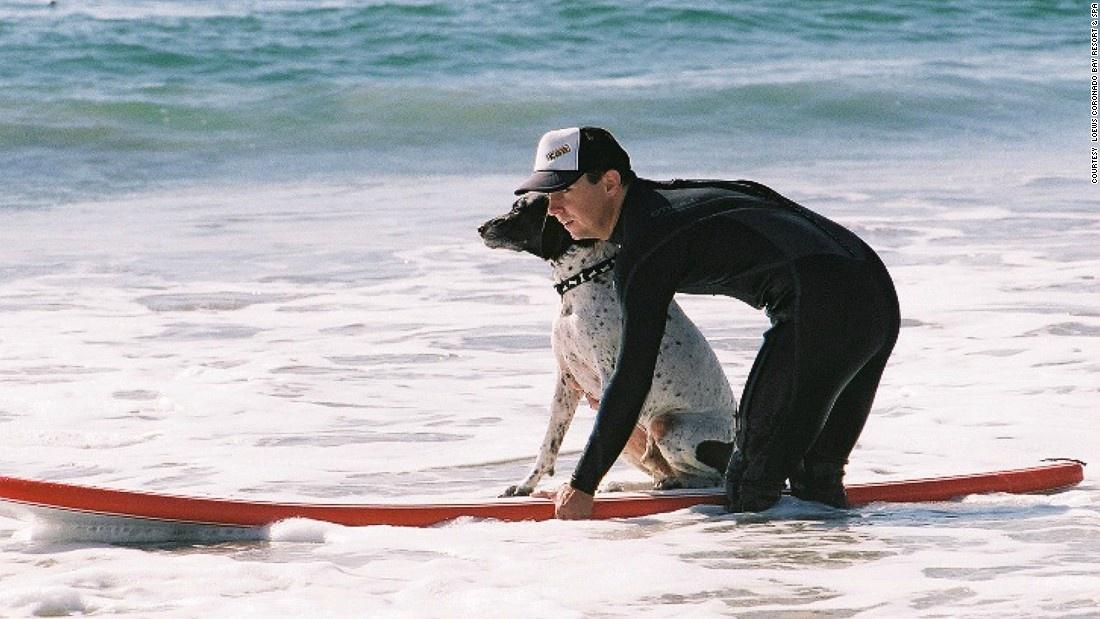 Инструктор по серфингу для собак