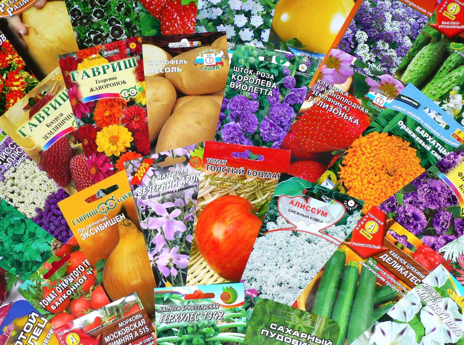 Свой бизнес: открытие магазина семян